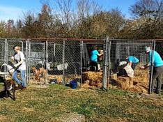 WSW Volunteers at SPCA