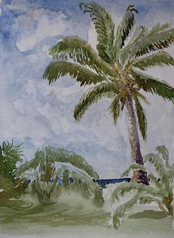 Palm Sketch