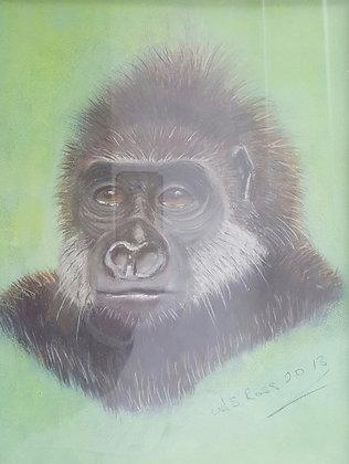 Gorilla Virgile by Allan Ross