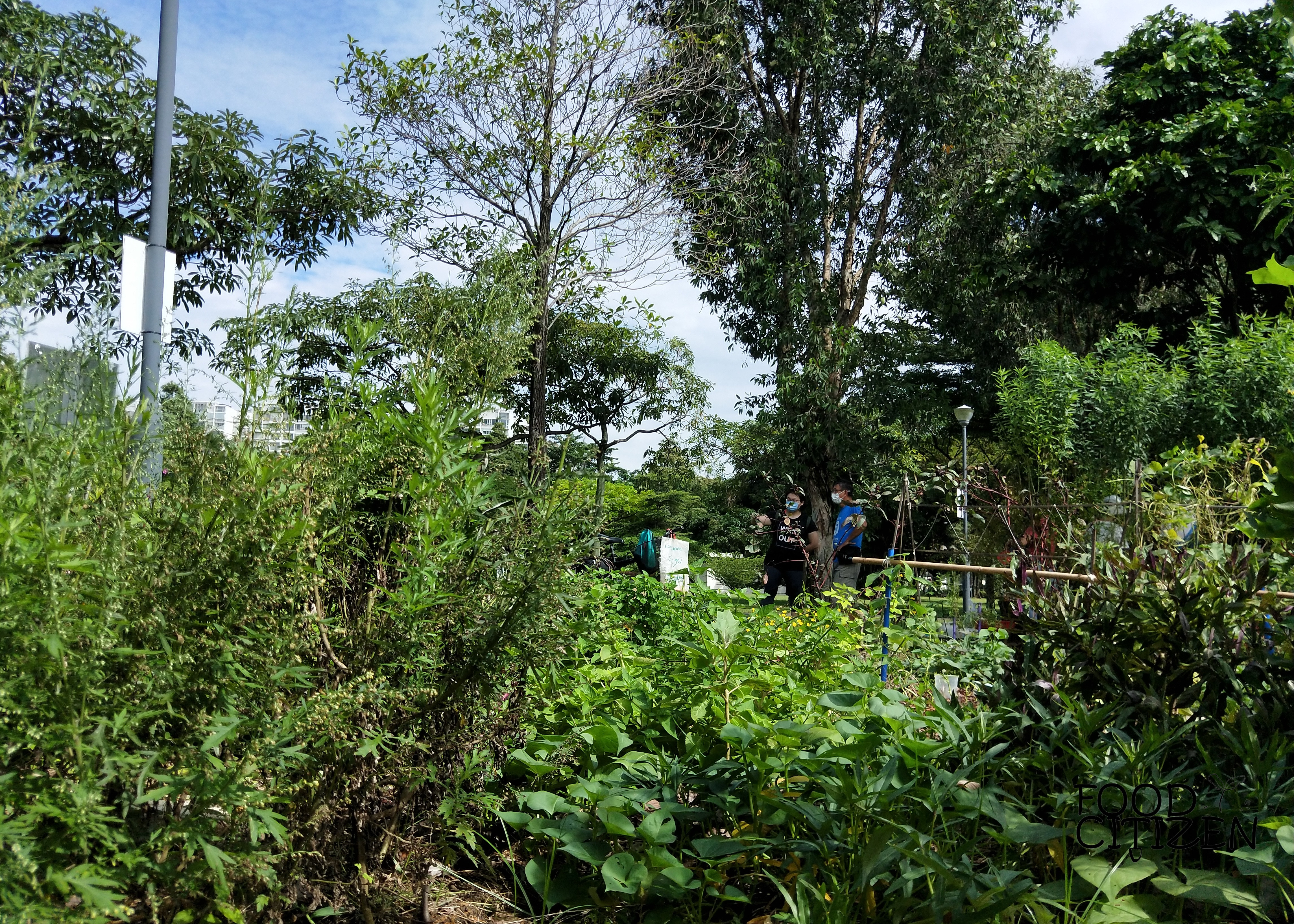 Principles for Natural Gardening