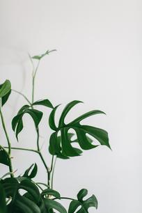Botanica Studios - At Home Session-61.jp