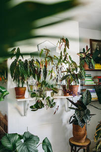 Botanica Studios - At Home Session-52.jp