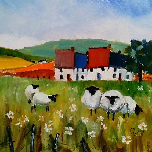 Sheep & Daisies