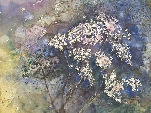 20th Century Watercolour - Cow Parsley