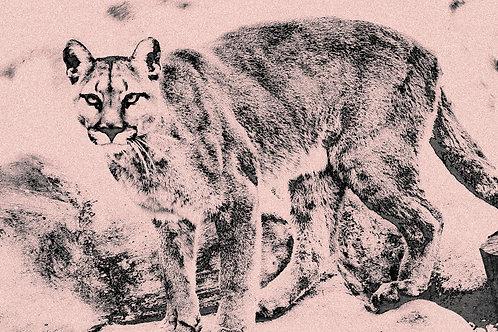 Rock Garden / Sketches of Big Cats