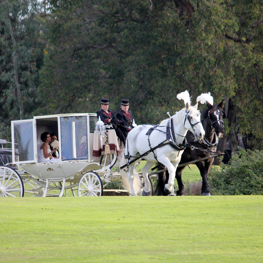 Horse and Carriage Marjan and Mobin The