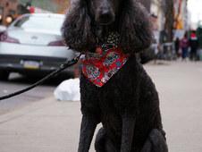 America's Next Top Dog.jpg