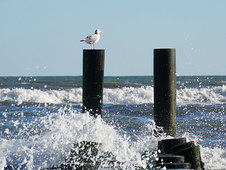 Splash Atlantic Beauty
