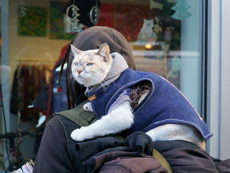 NYC Cat Back Packer