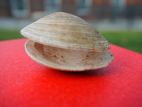 Clams on Governors Island
