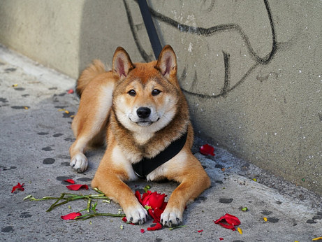 Romantic Dog