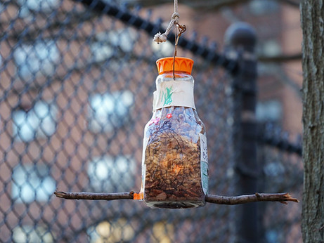 Homemade Bird Feeder