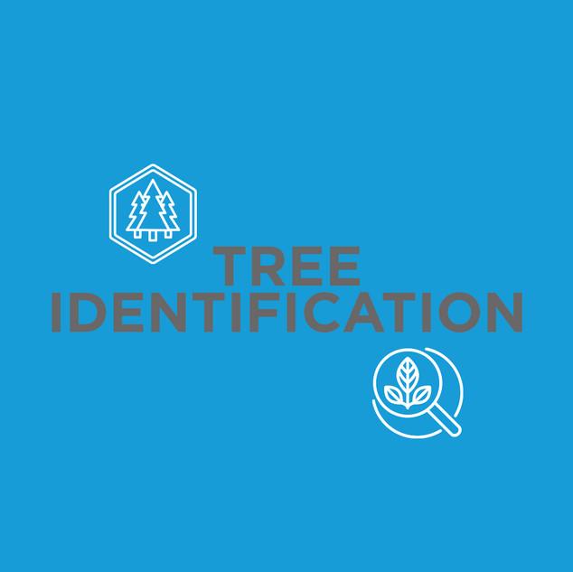 bcny_lesson_icon_tree_identification.jpg