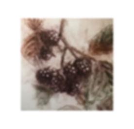 WildBlackberry_Sq.jpg