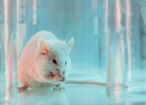 What can rats tell us about making better medications for alcohol use disorder?