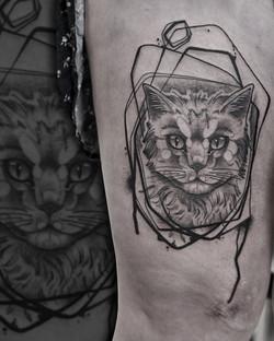 Tattoo Zincik - cat abstract tattoo desi