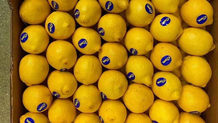Lemons - Large