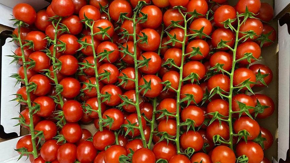 Tomatoes - Cherry on Vine