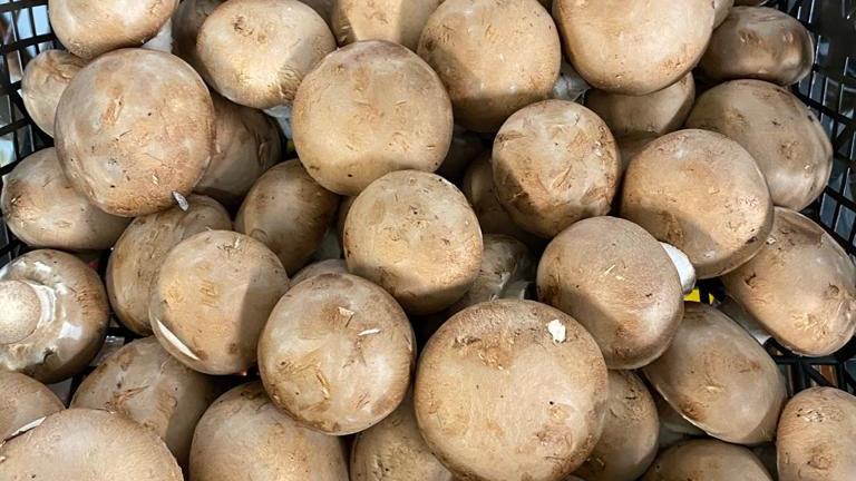Mushroom - Chestnut / Pink Paris
