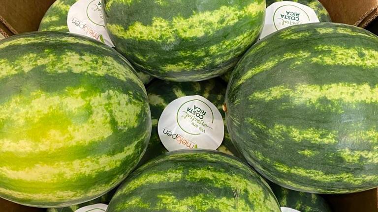 Melon - Water