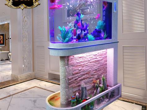 Chọn lựa và chăm sóc Bể cá thủy sinh mini