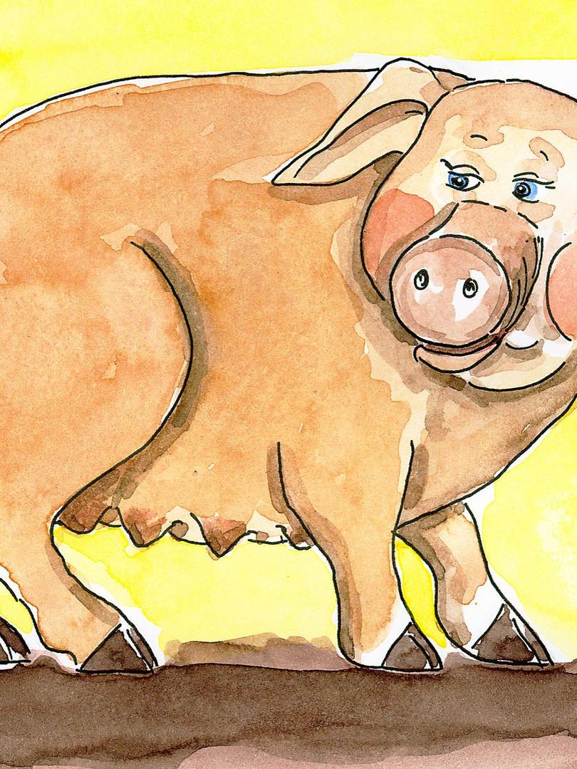 Bauernbörse: Tierkarte Schwein