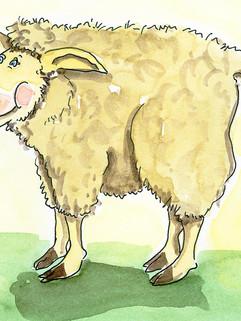 Bauernbörse: Tierkarte Schaf