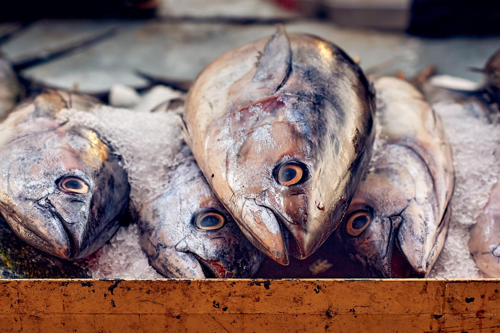 Fish market Oman