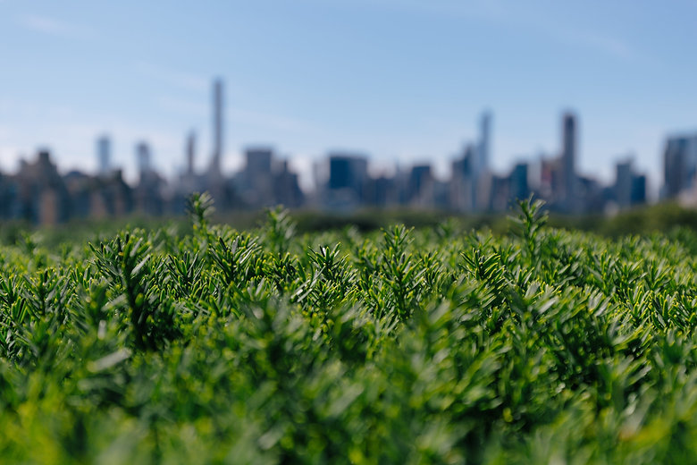 city-behind-greenery.jpg