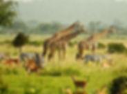 safari.jpg