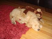 Sleepy G-doodle