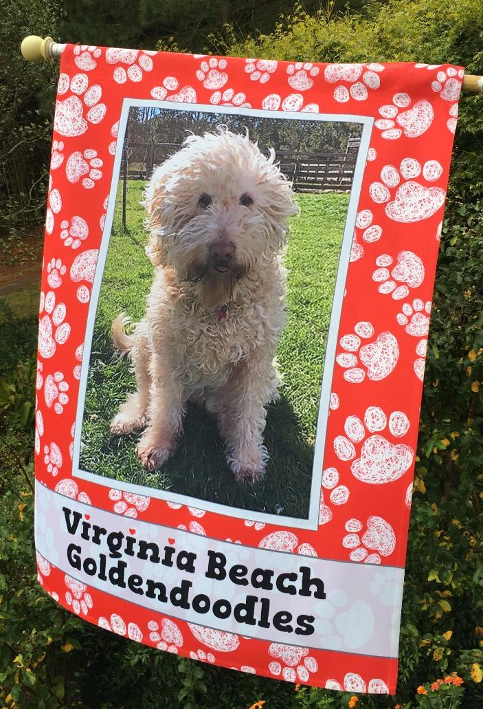 Virginia Beach Goldendoodles