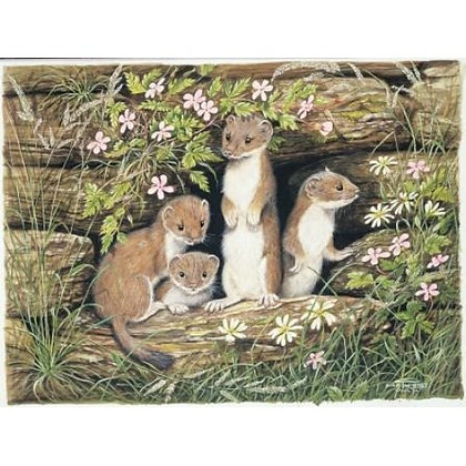Baby Stoats 1000 Piece Jigsaw Puzzle