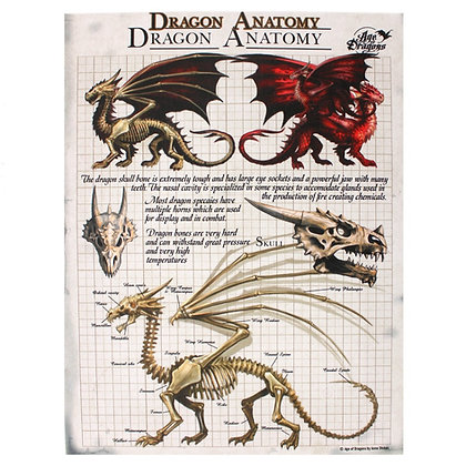 Age of Dragons Dragon Anatomy - Anne Stokes Canvas