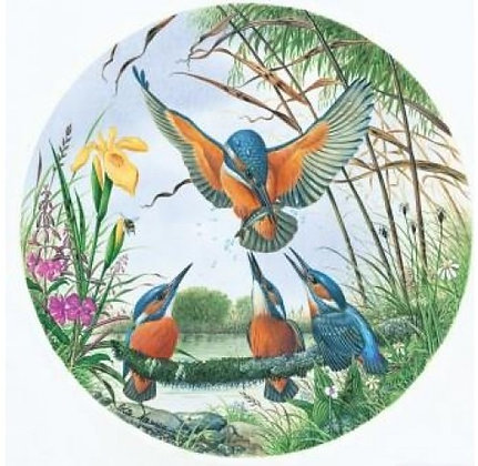 Kingfisher Family 500 Piece Circular Jigsaw Puzzle