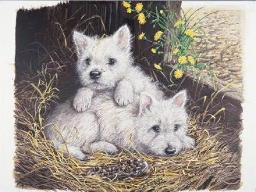West Highland Whites Dog 1000 Piece Jigsaw Puzzle