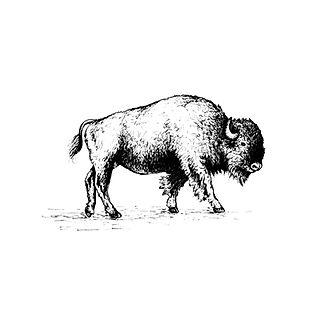Animal portrait artist Tennessee
