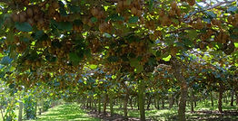 Orchard Monitoring and Control