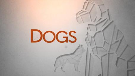 dogcrop6.jpg