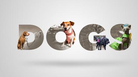 dogcrop4.jpg