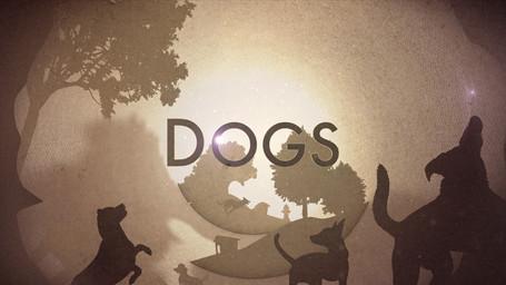 dogcrop2.jpg