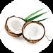 ココナッツ.png