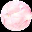 バラ.png