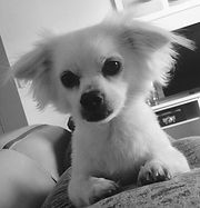 Angus the dog! for Michelle Kunta.jpeg