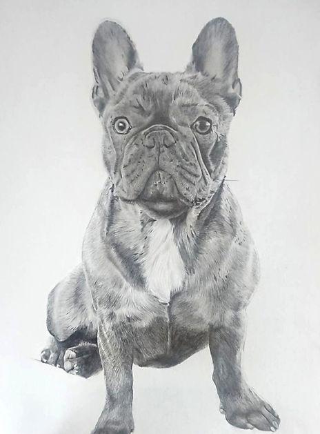 Frenchie Portrait