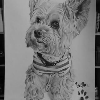 Milo the Dog