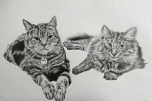 Extra Large A2 Highly Detailed Pencil Portrait