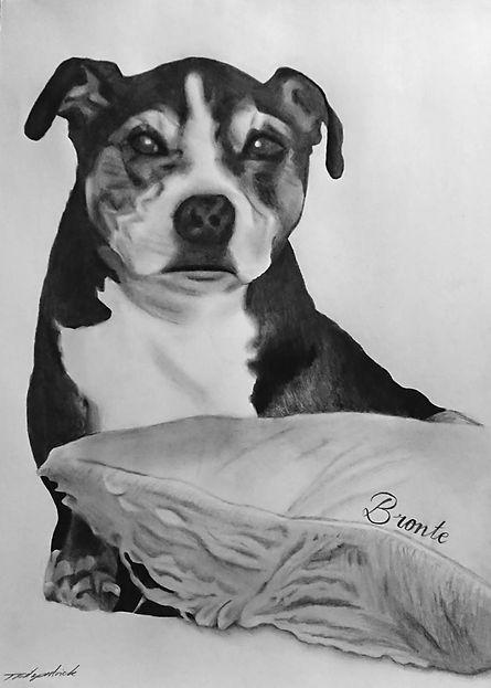 Staffy Dog Portrait