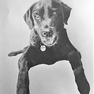 Shadow the Dog