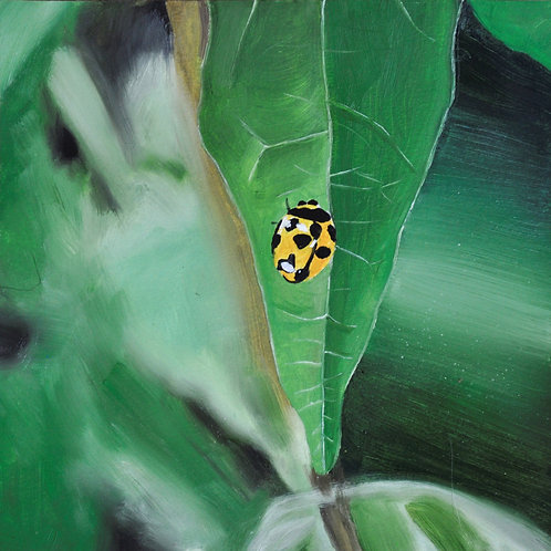 Ladybug  - Original Painting (20.7cm x 20.7cm square)